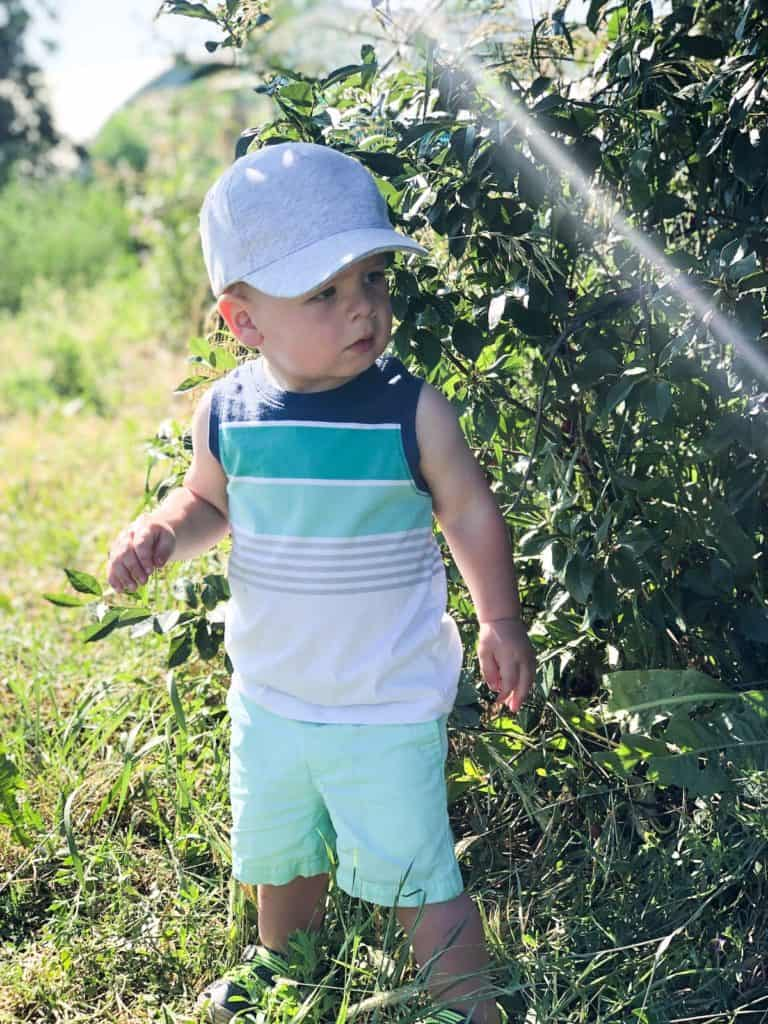 Toddler in Cherry Orchard